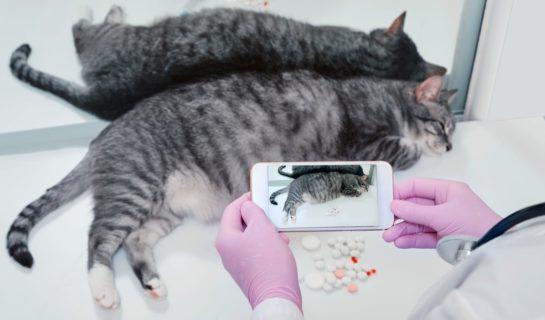 Mit der Katze zum Online-Tierarzt? Sprechstunde per Videochat