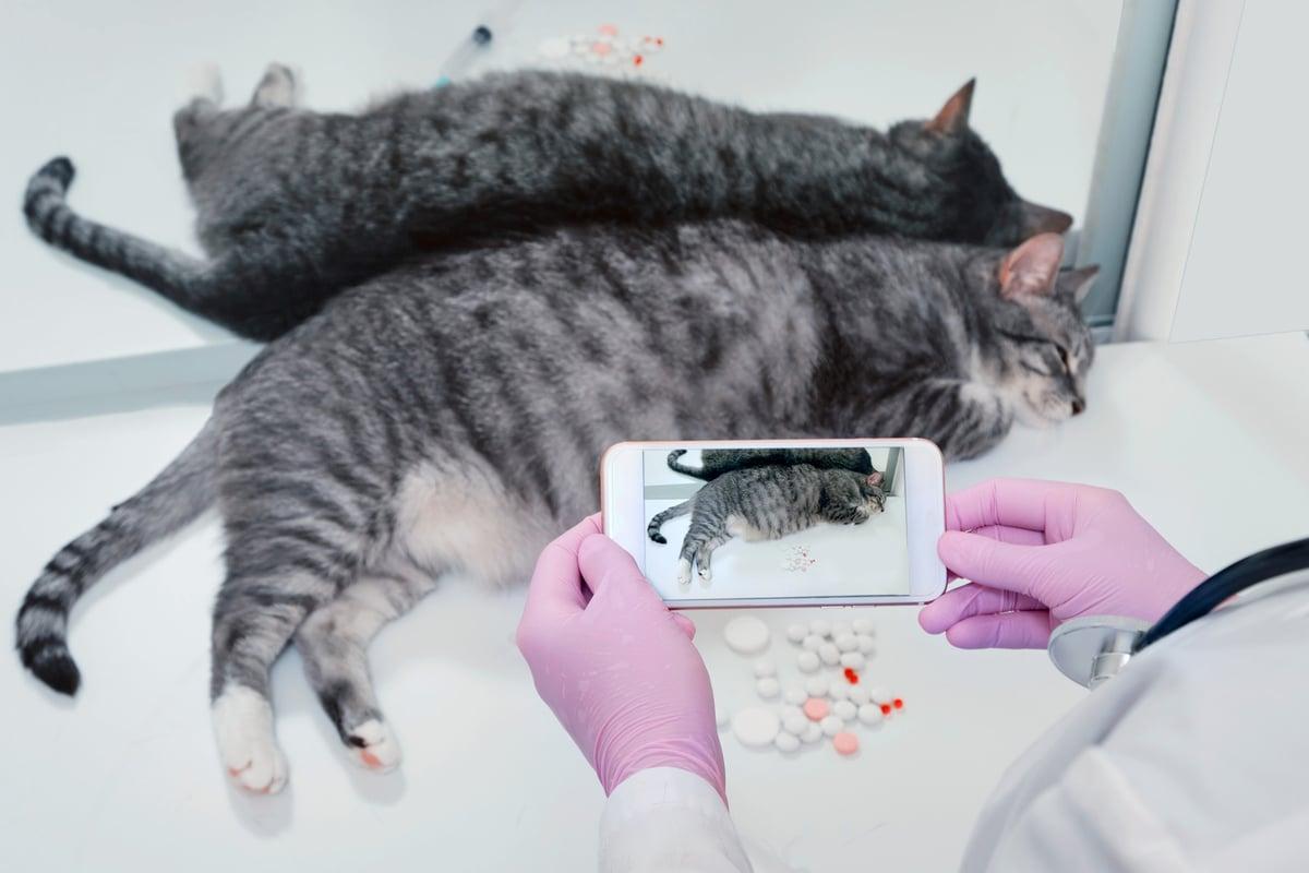 Telemedizin für Katzen