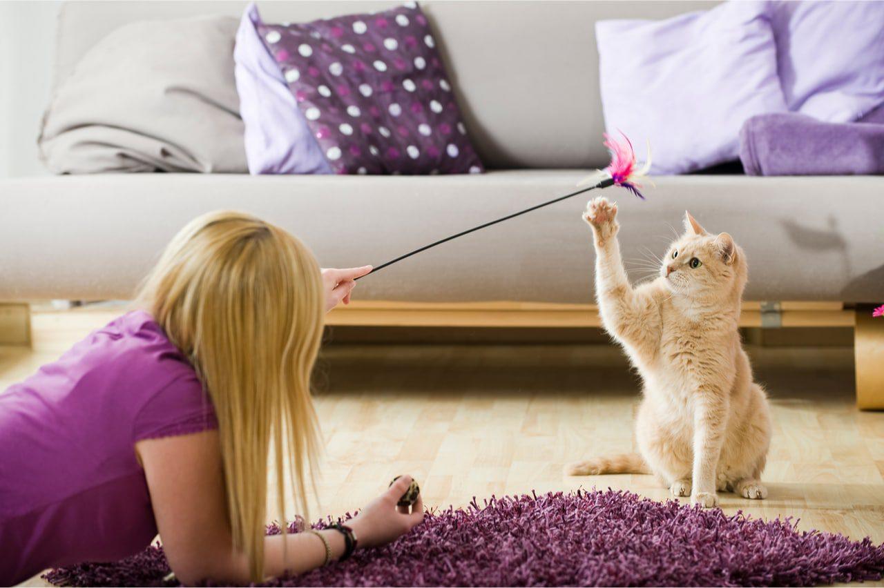 Katzenbetreuung vor Ort buchen