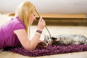 Katze zu Hause betreuen lassen mit Cat in a Flat