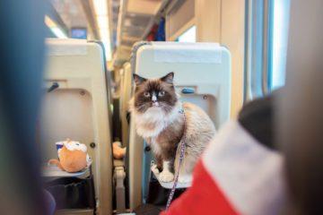 Bahn fahren mit Katzen – Wie nehme ich meine Katze im Zug mit?