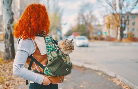 Sling Carrier für den Transport von Katzen